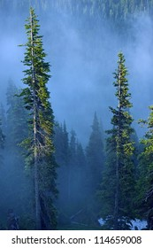Fog in Forest. Foggy Forest of Hurricane Ridge, Olympic Peninsula. Olympic National Park, USA. Mountains Photo Collection.