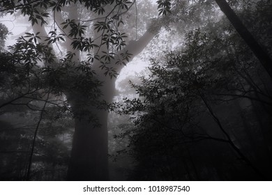 fog forest Misty Forest