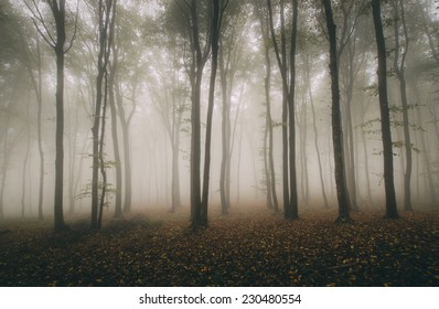 fog in forest on autumn day