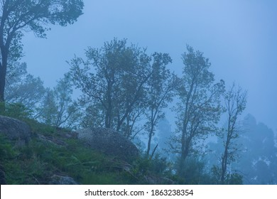 Fog in the forest at the portuguese national park, Geres, Portugal