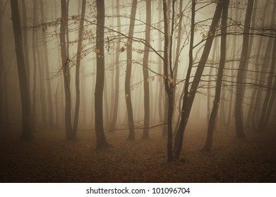 fog in a forest in summer