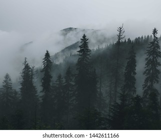Fog in the forest. Tatras Mountains