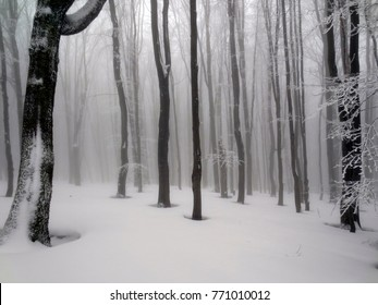 fog forest uludag wallpaper fresh weather ice environment blue ground wind calm mist panorama silence white freeze winter nature tree branch shadow fairytale evening time leaf trees woods sky magic p