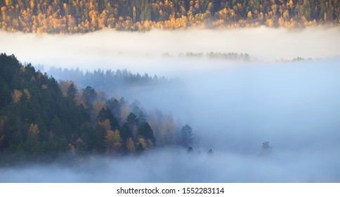 Fog in the forest, view from above