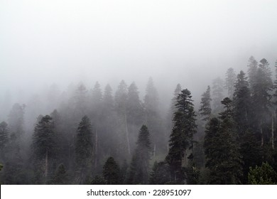 Fog hides the high forest in the mountains