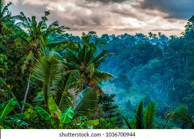 Fog. Jungle of palm trees in tropical Ubud, Bali, Indonesia. Evening forest, Cloudy, dark, rainy. View of the jungle at night and clouds in the sky. Fog in palm trees and in the forest. Holiday.