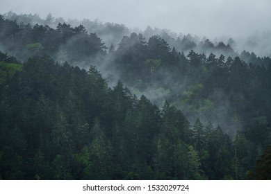 Fog and Mist ascends amongst the treetops