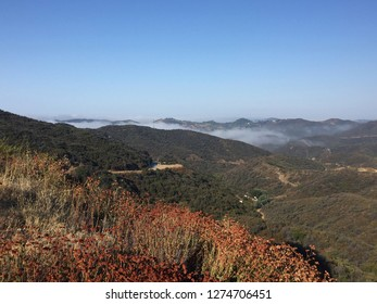 Fog in the mountains of California