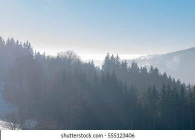 fog in mountains' forest