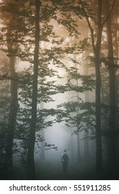 Fog in mysterious forest. Man walking between trees on forest road on misty, rainy day, gloomy natural landscape with enchanted atmosphere in morning light