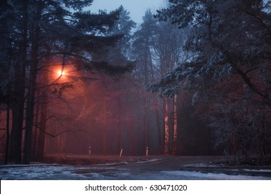 Fog mystical forest, evening blue color, nature