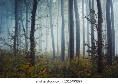 fog in natural autumn forest on rainy day, foggy woods landscape