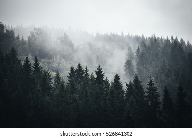 Fog in Norwegian Forrest