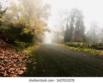 Fog on the Cheasty Greenway, Seattle WA