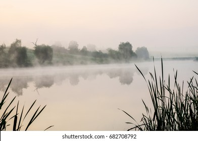 Fog on the lake with the reeds early in the morning