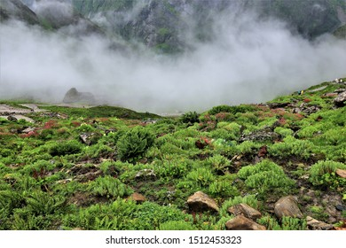 fog on mountain and rainforest,valley of flowers ,India, poppies blue flowers in valley of flower nation park,rainny forest,India, poppies blue flowers in valley of flower nation park