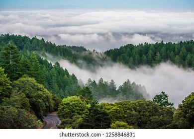 Fog on Mt. Tam