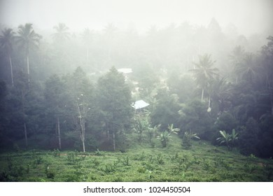Fog over the forest in the morning.selective focus.