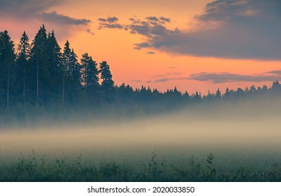 Fog over green field before sunrise. Misty early morning scene. Pink sky above pine forest. Foggy nature landscape with pine trees. Mist over meadow. Hazy summer evening after sunset Tranquil twilight