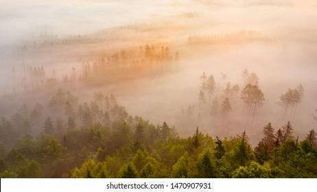 Fog over the morning forest