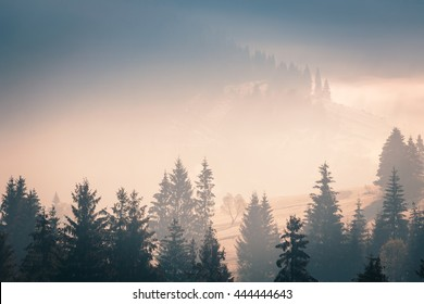 Fog over mountain range in sunrise light. Morning sun rays through the fog over mountain slopes, covered with spruce forest.
