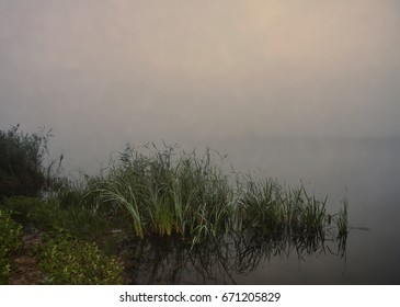 Fog over river, summer morning, shore and reed with reflection in water