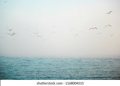 fog over the sea, autumn evening by the sea, gulls over the water, gradient colors of blue and white, birds in the misty sky