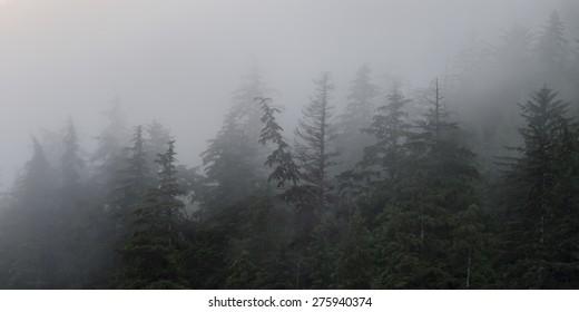 Fog over trees, Skeena-Queen Charlotte Regional District, Haida Gwaii, Graham Island, British Columbia, Canada