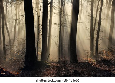 Fog and rays through a forest at an early hour .