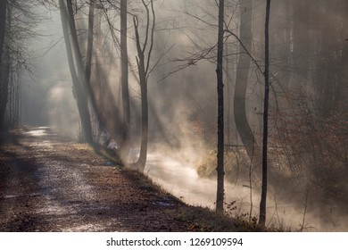 Fog rises on a sunny winter morning from a creek on the forest road