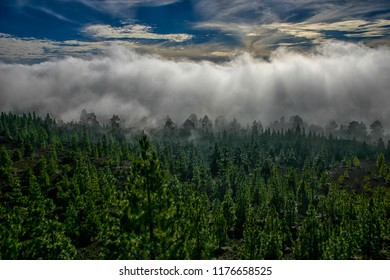 Fog rising from forest in Tenerife