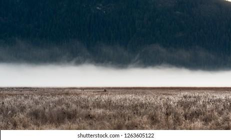 The fog rising from Pitt-Addington Marsh on a cold fall morning