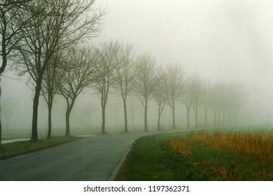 Fog in road
