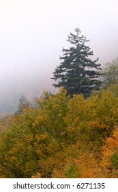 Fog rolls in and forms a nice contrast against fall colors in the Great Smoky Mountain National Park.