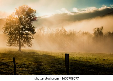 Fog shrouded tree in Cades Cove in the Smoky Mountains