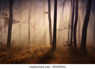 Fog and sun in the autumn forest blur