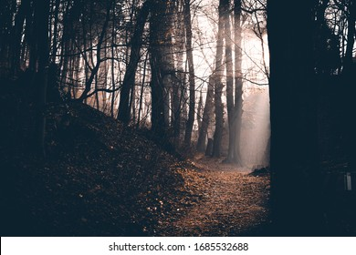 Fog and sun rays in the early morning in the Golden forest
