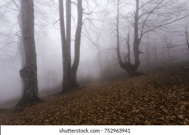 Fog in the woods in autumn