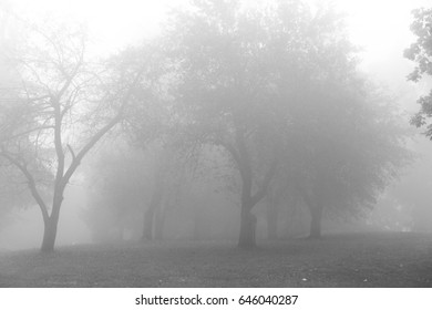 Foggy area with deciduous trees