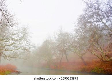 A foggy autumn day by the stream