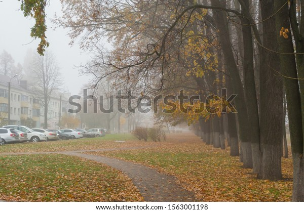 foggy-autumn-day-park-big-600w-156300119