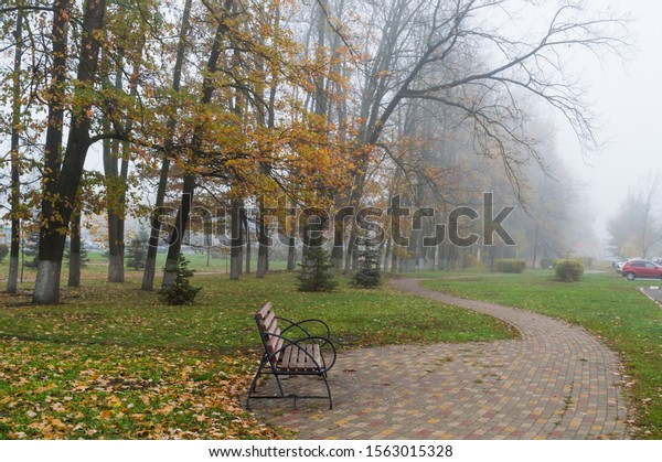 Foggy autumn day in the Park. Big sloping trees and a bench on a winding path in the fog. Park landscape