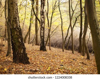 Foggy autumn forest landscape photo background, mysterious scenery