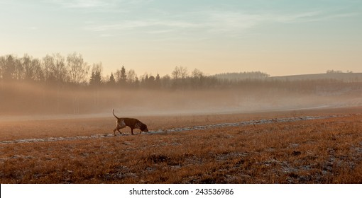 Foggy autumn landscape with a hunting dog.