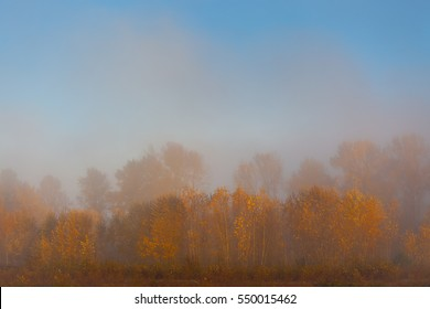 Foggy autumn morning featuring yellow and orange leaves and a hint of blue sky