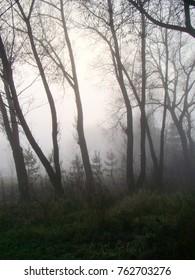 Foggy autumn park landscape view