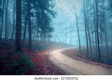 Foggy autumn seasonal forest road. Magic blue light in the woodland.