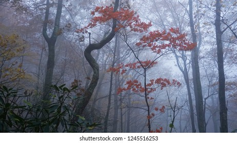 A foggy autumn view in the Appalachian Mountains of Tennessee.