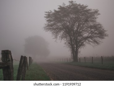 Foggy Back Road 2