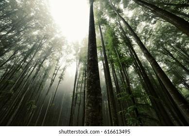 Bosque de alverjas